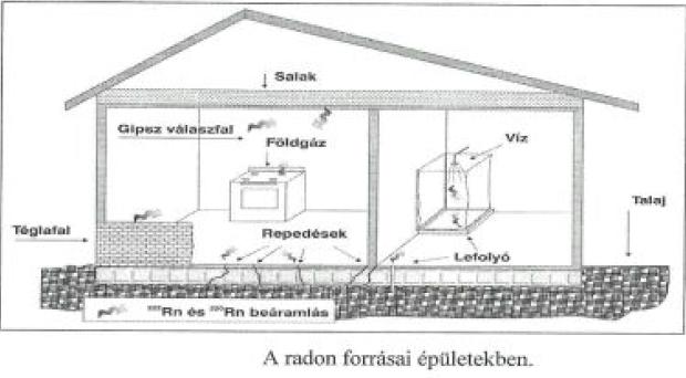 efectele biologice ale radiatie
